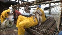 americas-toughest-job-crabs.jpg