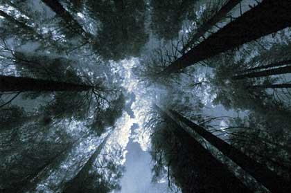 YosemiteNP_AT04622.jpg