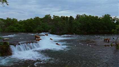 national-parks-bears.jpg