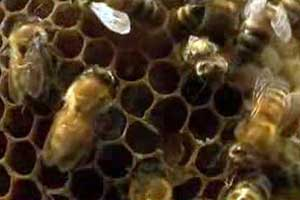 nature-bees.jpg