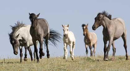 nature-horses-top.jpg