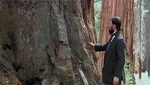 muir-tree.jpg