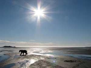 bear-under-sun-in-katmai-an.jpg