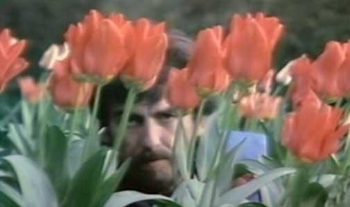 LMW-2-35-tulips.jpg