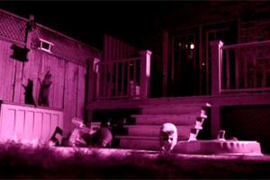 raccoon-night-party.jpg