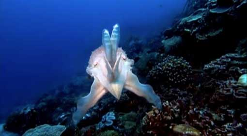 NOVA-cuttlefish-1.-jpg.jpg