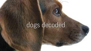 dogs-decoded-nova-pbs.jpg